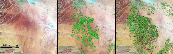 agricultural growth saudi arabia