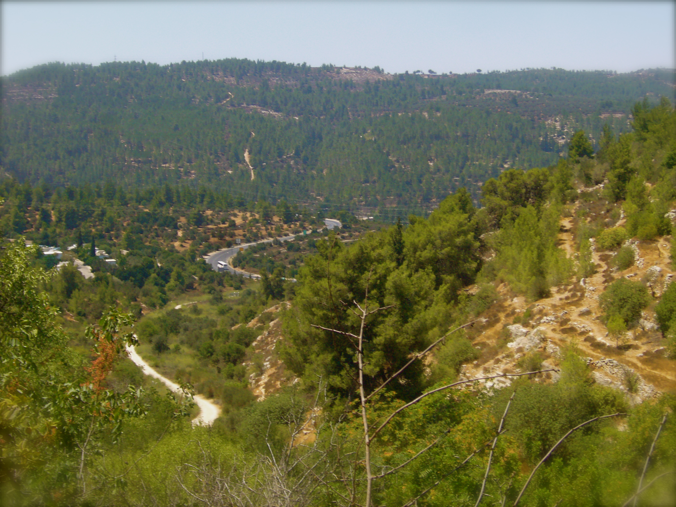 Forest in central Israel, as seen from Ein Karem