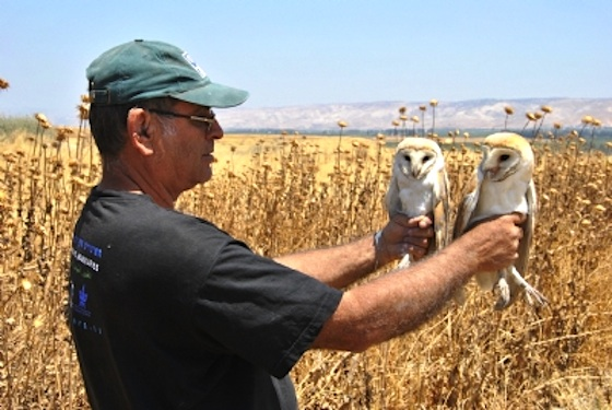 Owl Love Knows no Borders