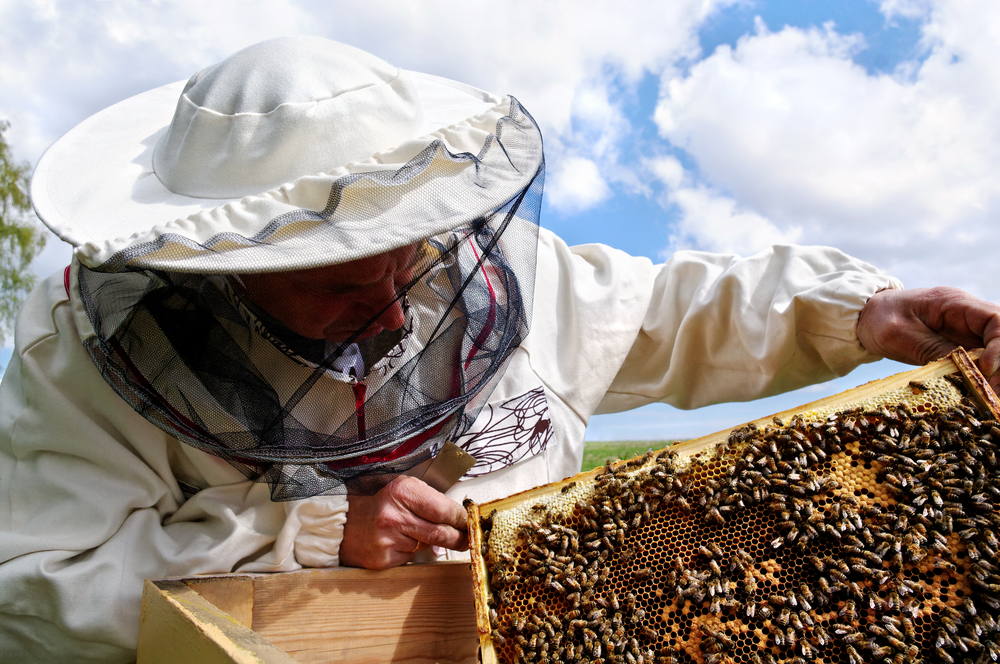 London Mosques Start Beekeeping Trend – INTERVIEW