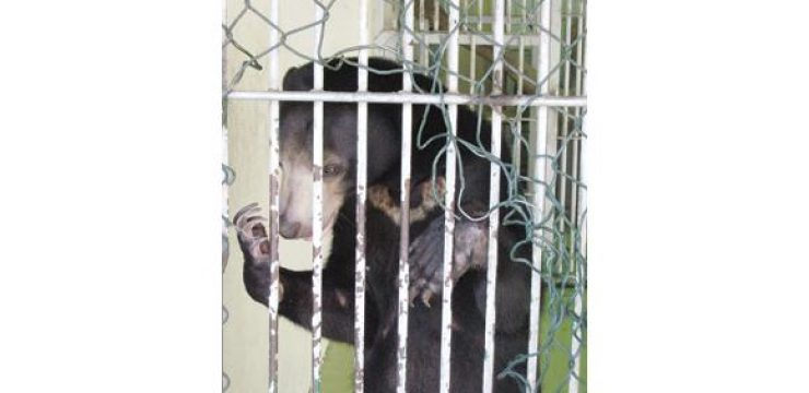 caged-bear-saudi-arabia.jpg
