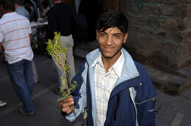 Yemeni Children Addicted to Khat are Skipping School