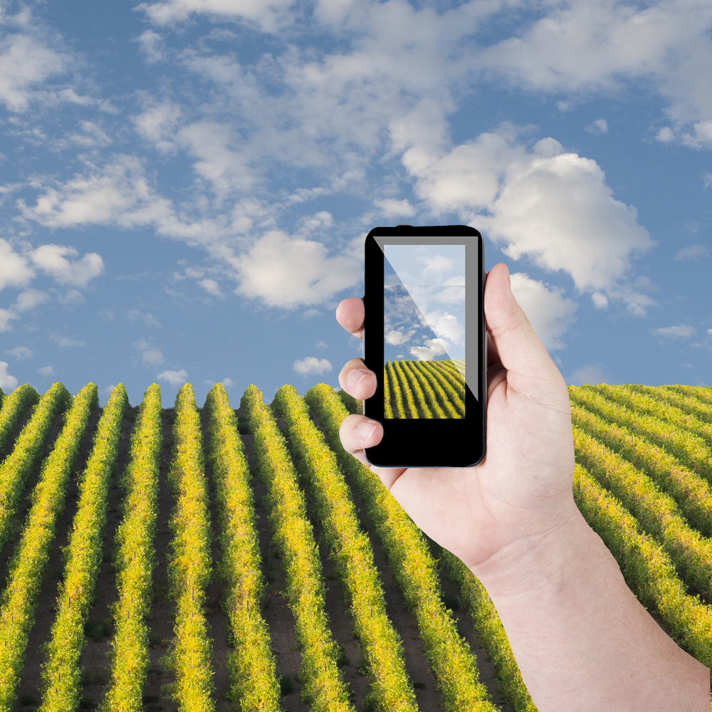Could Phones Revolutionize Palestinian Agriculture?