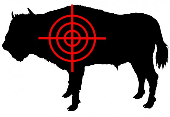 syria cow, bison, crossfire, target