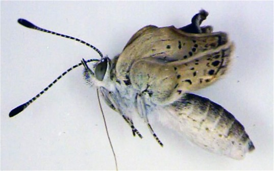 mutant butterfly, Fukushima, nuclear power, Middle East, earthquakes