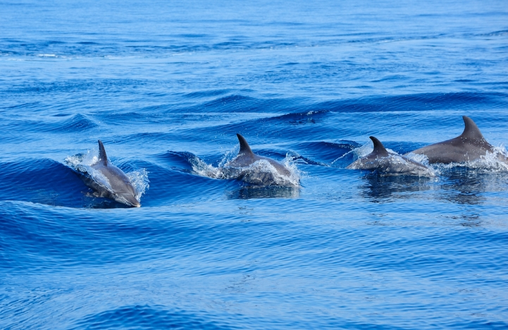 Why Dolphins Have Disappeared from Israel's Shores