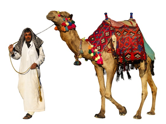 Dubai, Camel Reproduction Center, science, health, FDA, genetically-modified animals, camels