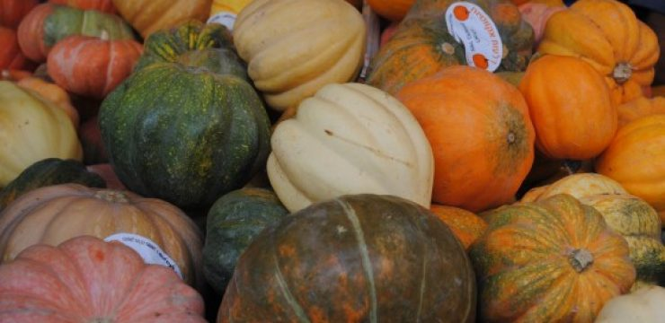 autumn-squashes-560x4021.jpg