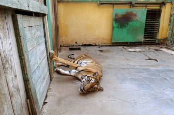 Animal cruelty, Egypt, Zoos, wildlife conservation, animal activism