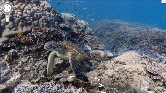 google maps street view under water sea turtle great barrier reef