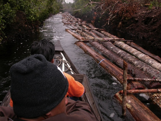 UN Report: 90% of Illegal Logging May be Linked to Organised Crime