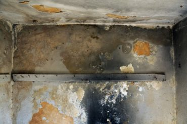 Fungus Forces Family From Sharjah Home