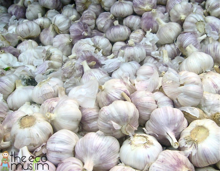 Plants Of The Quran: Garlic (Thūm)
