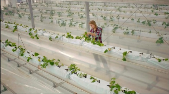 sahara forest project cucumbers desalination solar
