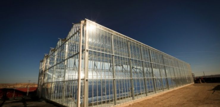 GlassPoint-Solar-Greenhouse.jpg