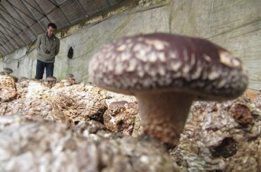 Mushroom Farmers Start to Sprout Up in Iraq