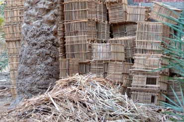 Date Palm Leaves Scrub Pharmaceuticals From Hospital Wastewater