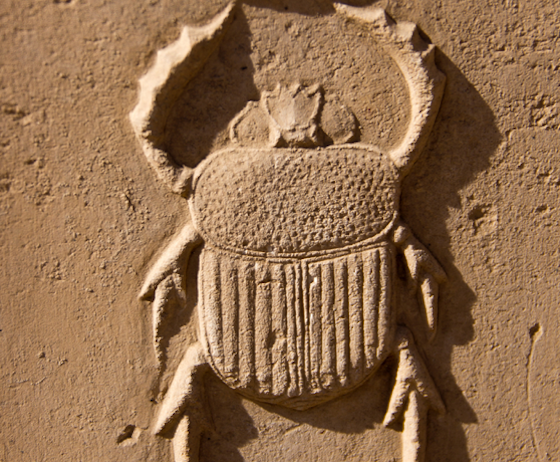 Scarab Beetle, Astronomy, Egyptology, Nature, Desert