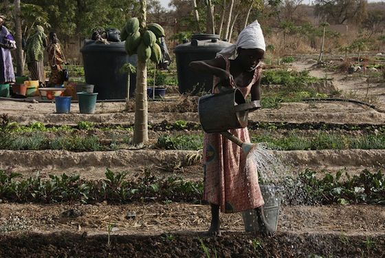 mali-water-drought-conflict.jpg
