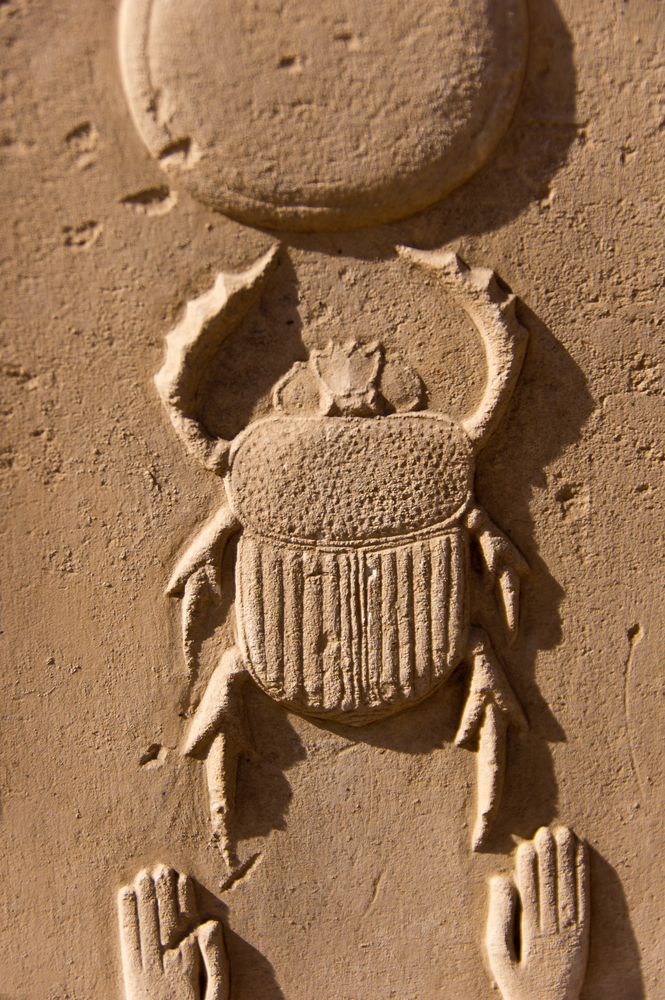 Scarab (Dung) Beetles Navigate by the Stars