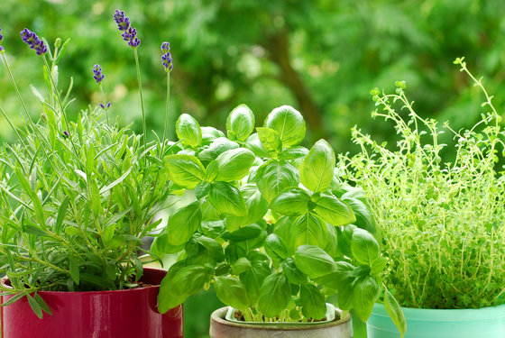 Grow 7 Healing Herbs At Home