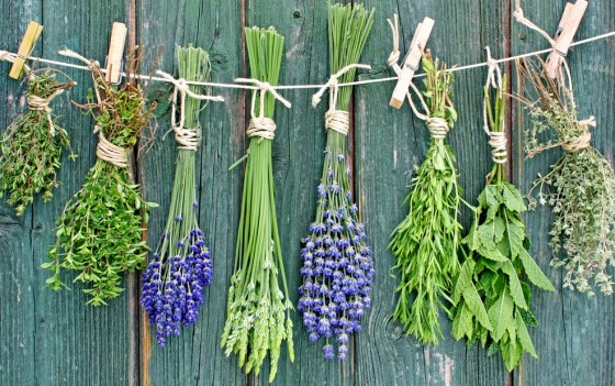 string of herbs on wall