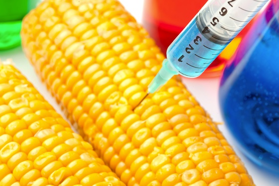 GMOs, genetically modified organisms, monsanto, ISAAA, egypt, agriculture, food, poverty, health