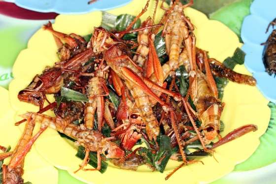 image-kosher fried grasshoppers