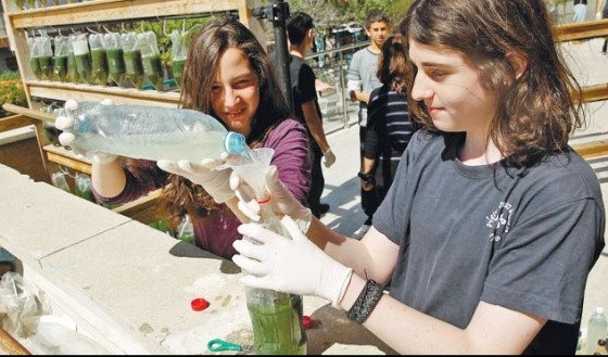 israel teens bottle algae algeed
