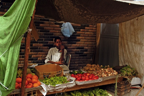 Egypt's Battle With GM Crops (and Food Poverty)