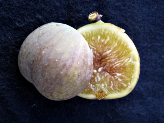 syrian persian white fig