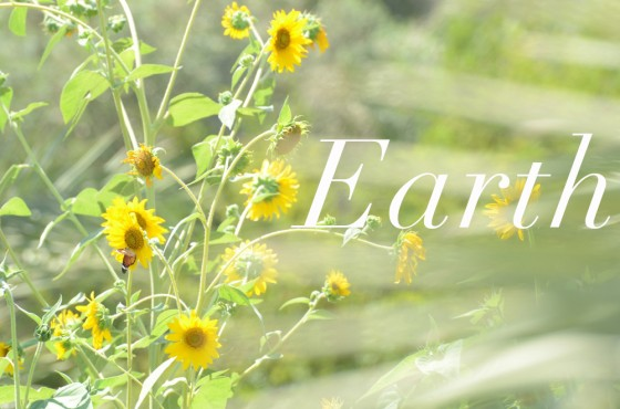 Earth Day, sunflowers, butterfly, photography, nature, Tafline Laylin, Green Prophet, Earth, nature, pollination