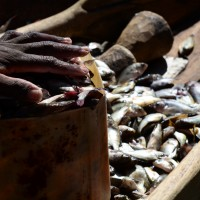 Tafline Laylin, nature, travel, photography, art, eco art, Earth Day, fish, fishermen, Kenya, boat