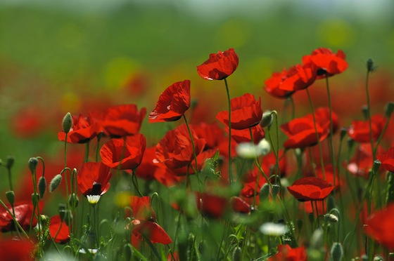 Israeli Wildflowers Show Environmental Education Can Inspire Change