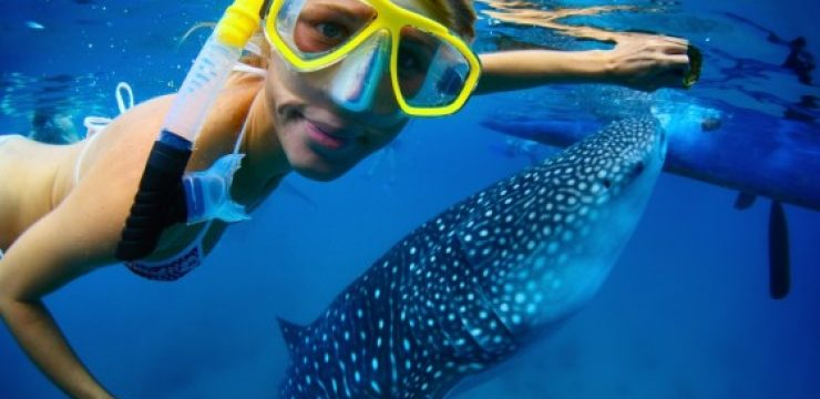 woman-swimming-whale-shark-red-sea.jpg