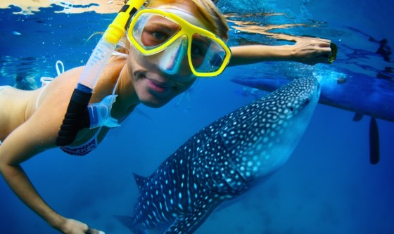 whale shark red sea, woman swimming with sharks