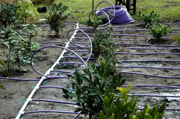 Netafim Drip Irrigation Recognized by Stockholm Industry Water Award