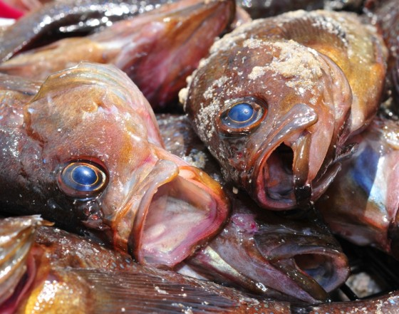 Egyptians eat stinky toxic fish to mark spring holiday for My urine smells like fish