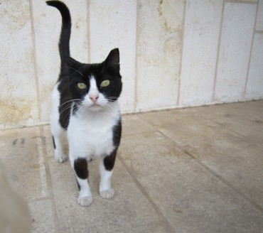 My Israeli Street Cat Turns 13 – That's Stray Longevity!