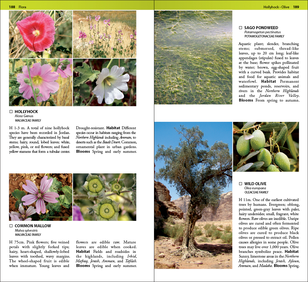 Jordan flora field guide book