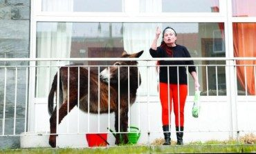 Lola the Donkey from Middle Eastern Play Runs Afoul of Belgian Police