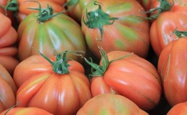 Tomatoes, eggplants, herbs and fruit:  July seasonal produce