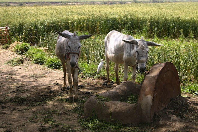 agriculture, egypt, ancient river, irrigation, water issues, egypt, ethiopia