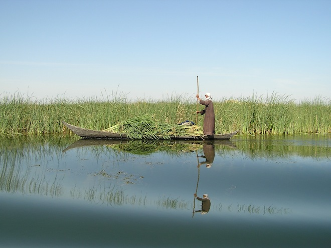 Iraq's Newly Protected Marshes a Huge Conservation Turnaround