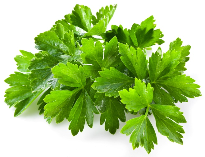 water purification, herbs that purify water, cilantro, water issues,