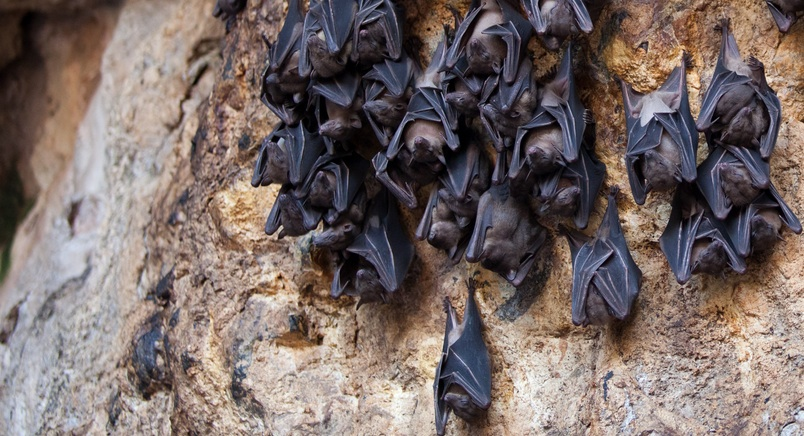 fruit bats decline in cyprus and move to turkey green prophet