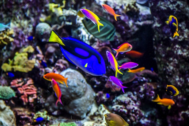 Dubai Developer Relocates Coral Reef that Thrives in New ...