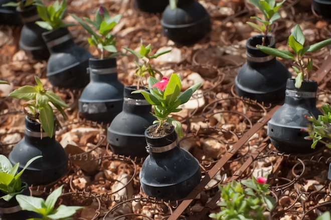 A Grenade Garden Helps Palestinian Mother Move On Green Prophet