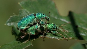 Middle East and Swiss Researchers: Bugs Not Gay