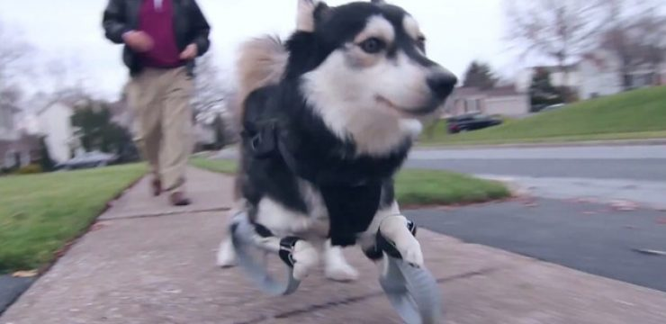 3D-printed-legs-alow-dog-to-run.jpg